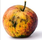 Bad apple yellow