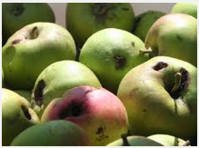 Bad apples green